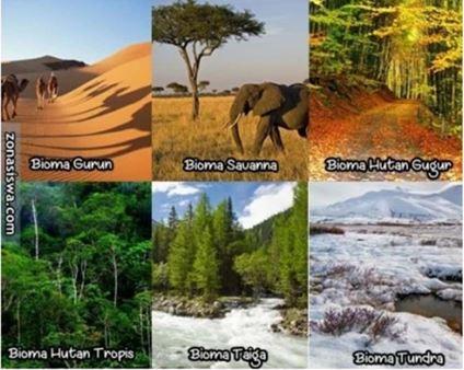 Gambar berbagai macam bioma di eksistem darat Sumber: catatangeografi.wordpress.com
