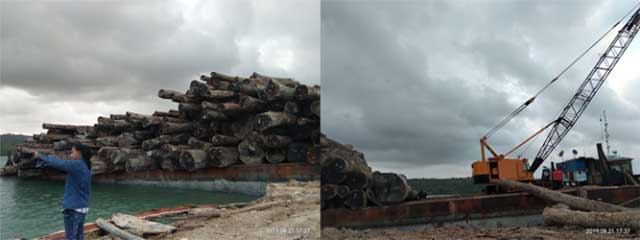 Saumlaki, Dharapos.com - Bupati Kepulauan Tanimbar, Petrus Fatlolon telah mengeluarkan surat tentang penghentian sementara atau moratorium kegiatan Izin Usaha Pemanfaatan Hasil Hutan Kayu-Hutan Alam (IUPHHK-HA) atau Hak Pengelolaan Hutan (HPH) kepada Direktur Utama PT. Karya Jaya Berdikari (KJB) melalui surat nomor 552/785/2019 tertanggal 26 Juni 2019.    Moratorium ini sebagai tindaklanjut dari surat pemberitahuan moratorium yang dikeluarkan oleh Gubernur Maluku, Murad Ismail nomor 552/1850 tanggal 10 Juni 2019 perihal Pemberhentian Sementara (moratorium) Kegiatan Operasional IUPHHK-HA/HT yang tembusannya disampaikan kepada Bupati/Walikota se-provinsi Maluku.