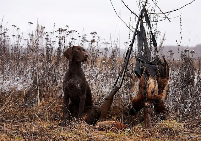 The 10 Best Hunting Dog Breeds