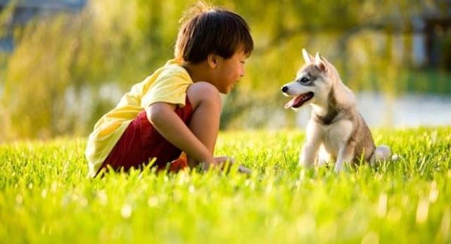 الكلاب,تتواصل الكلاب مع البشر, هل تتواصل الكلاب مع الانسان