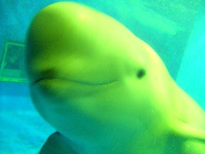 017 #かわいい #水族館 #スナメリ #笑顔
