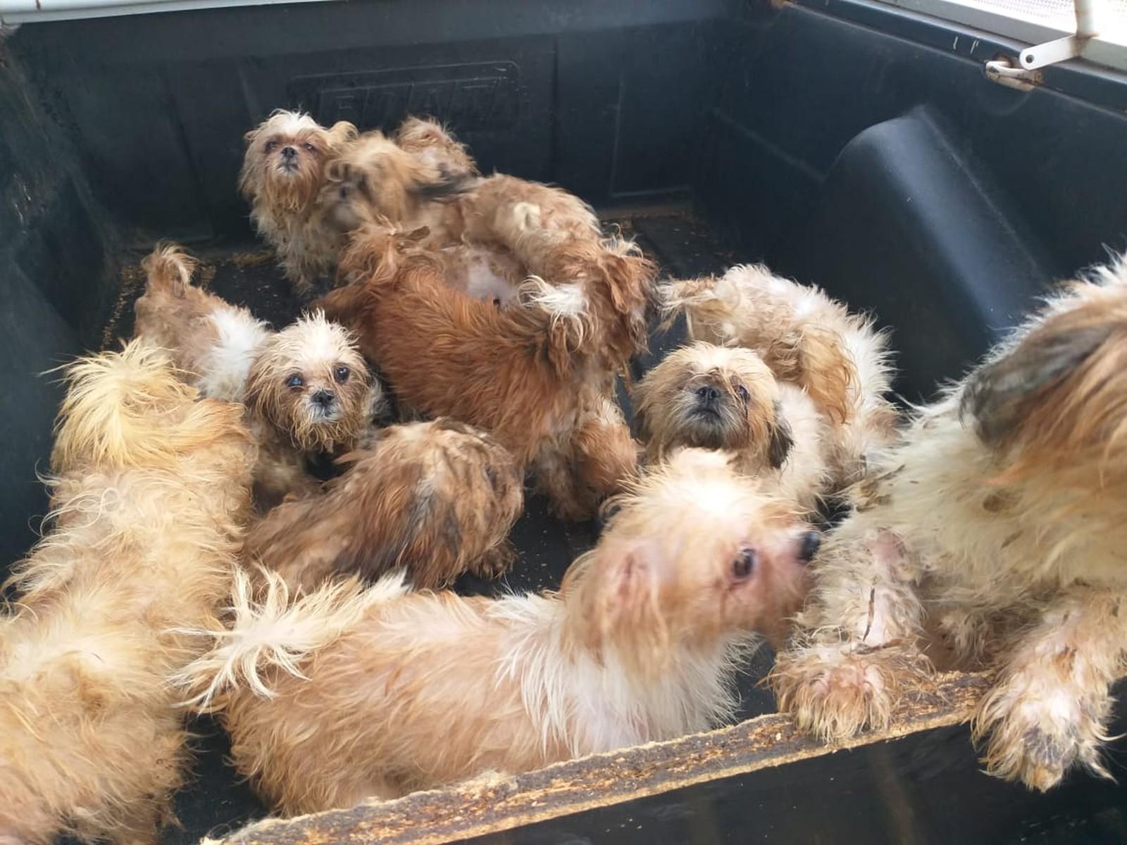 Polícia de Rio Preto resgata 66 cães após denúncia de maus-tratos