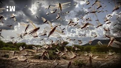 mergezone-Locust attack