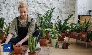 ¿Por qué aprender jardinería y diseño de paisajes?