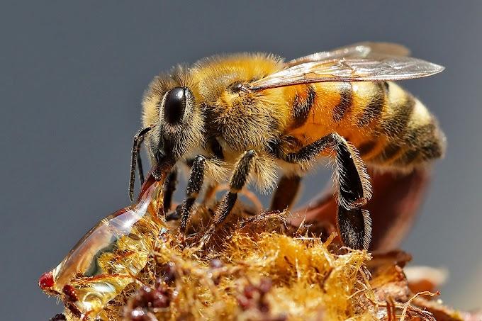 Ape/Bee - Palermo