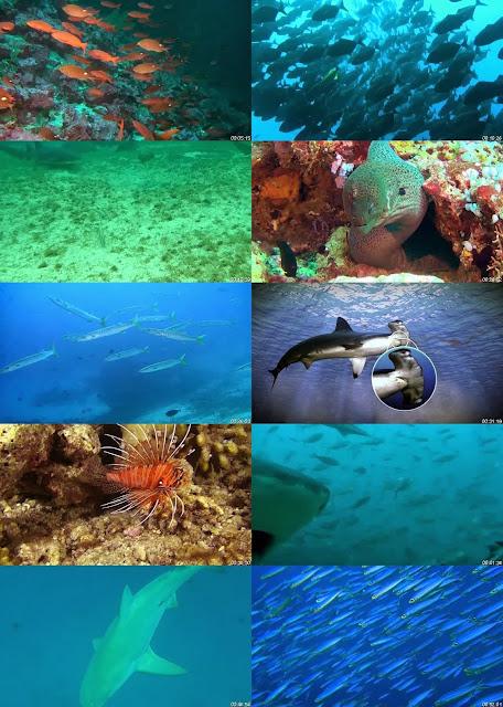 Ocean Predators 3D DVDRip Latino