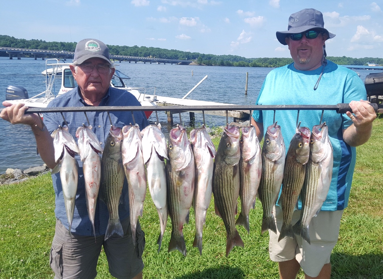 Striper report july 3rd fun jim hemby guide service for Lake anna fishing report