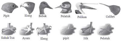 Bentuk Paruh dan Kaki Burung Beserta Fungsinya