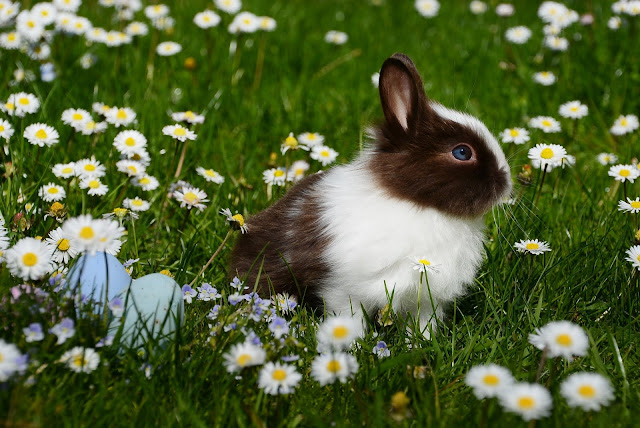 A Beautiful Bunny Close-Up Looking Great in the Flowers Fields Enjoying in the Garden at Grass Field Animals