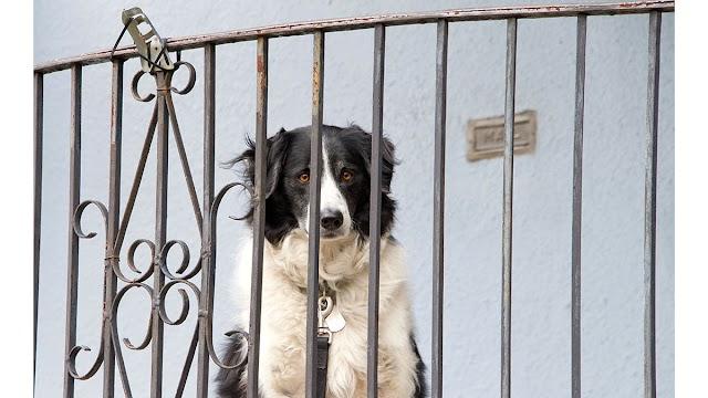Και τι πειράζει να αφήσουμε τον σκύλο στο μπαλκόνι όταν λείπουμε; Και όμως…