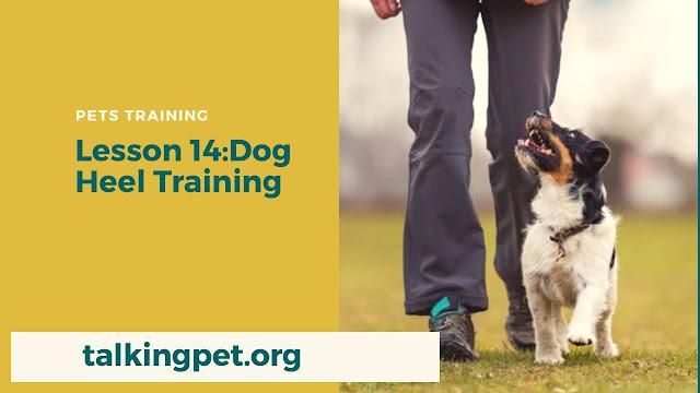 Dog Heel Training in 2020