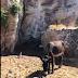 [Ελλάδα] Γαϊδουράκια  δεμένα ...στον ήλιο και χωρίς νερό ...[βίντεο]