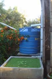 cara memanfaatkan air hujan menggunakan drum