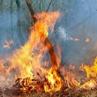 13 years old boy from Inikiri Benard village thrown into fire for doing this..