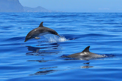 Sistem Sonar pada Lumba-lumba
