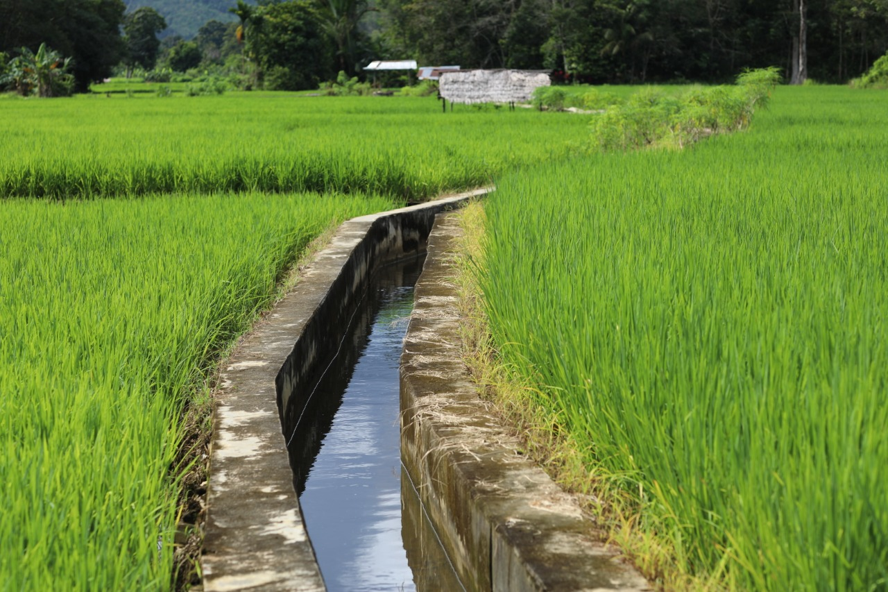 Bisa Dimanfaat untuk Pasca Panen, Kementan Ajak Petani Gunakan KUR