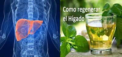 regenerar el hígado naturalmente