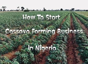 How To Start Cassava Farming Business In Nigeria