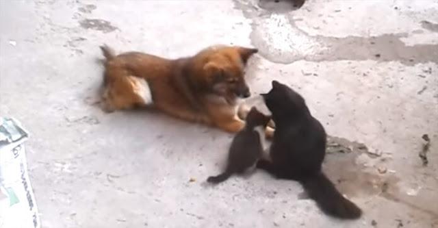 """Ibu Kucing Ini Mengajak Anak-Anaknya Untuk Memperkenalkannya Dengan Teman Baiknya """"Anjing"""" - Tapi Hal Ini Terjadi..."""