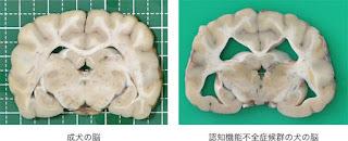 cérebro do cão