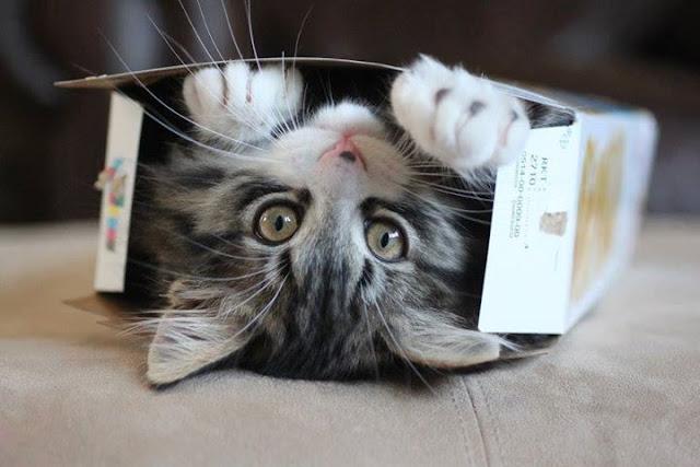 Cats humor #4