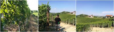 vigne roero arneis deltetto