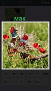 655 слов сидит фазан на поле которое все в маке 6 уровень