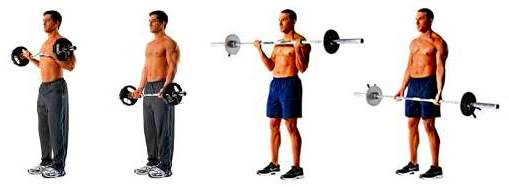 Biceps curl with barbell, standing