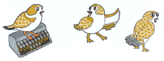 sketches of a bird with a steno keyboard pattern in the feathers of her wing