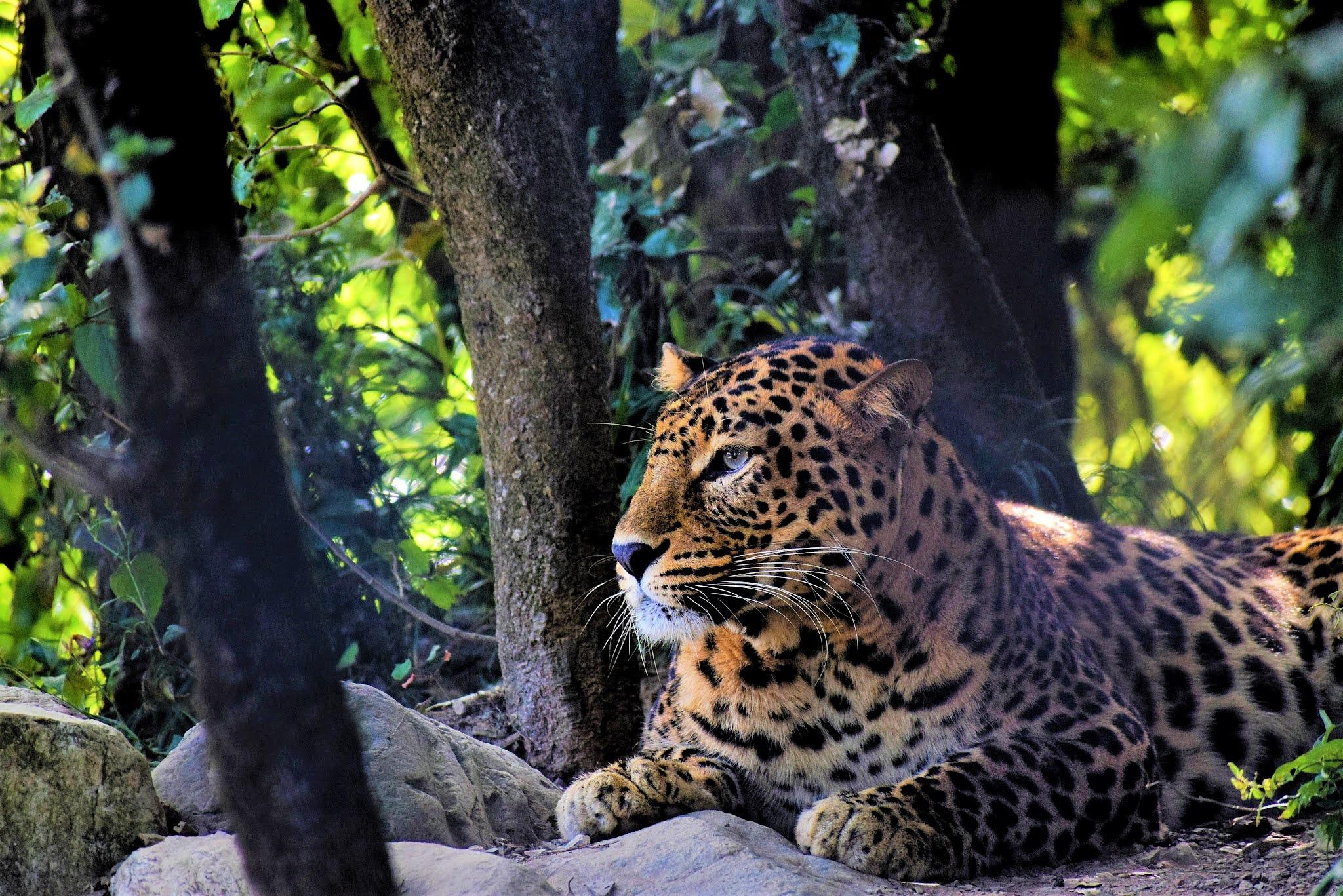 JIM CORBETT NATIONAL PARK: THE PARADISE OF TIGERS