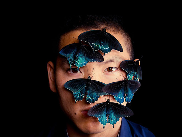 Pipevine Swallowtail в Калифорния