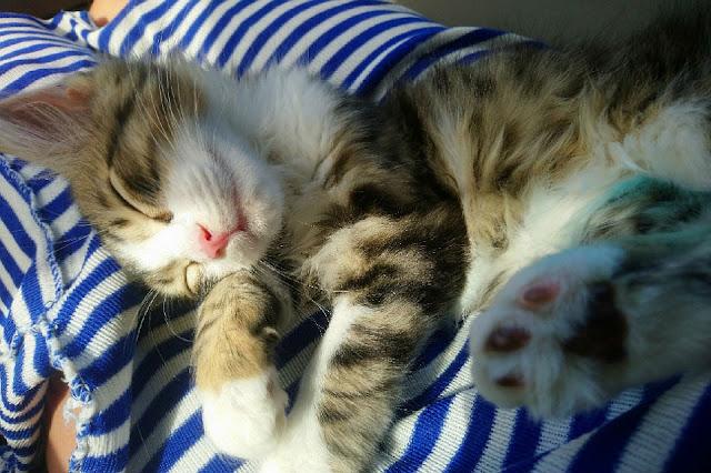Люди 3 тысячи километров везли больного котенка, чтобы спасти его!
