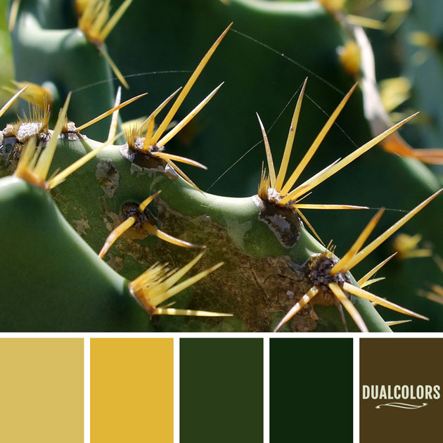 color_paleta_45