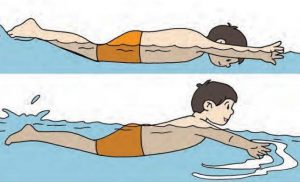 teknik gerakan lengan renang gaya dada