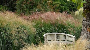 Gramíneas ornamentales en el jardín. Knoll Gardens