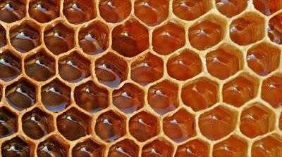 Γιατί οι μέλισσες κάνουν το μέλι