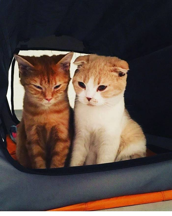The cats that inspire Ed Sheeran.