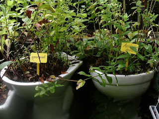 Sustainable gardening recycled toilets as planters Centre for Alternative Technology Green Fingered Blog