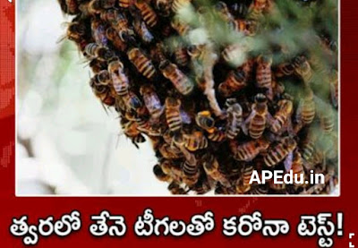 Corona test with bees soon