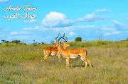 دليل السفر إلى كينيا - السياحة في إفريقيا