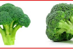 Benefits of Broccoli Consumption for Type 2 Diabetes Patients