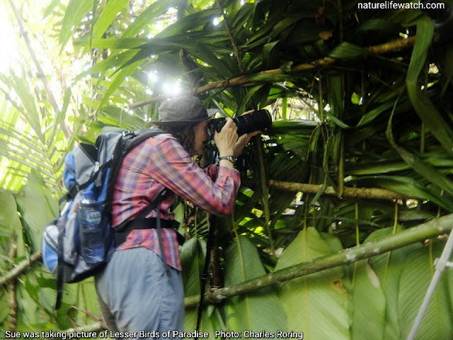 Sue Draheim, a tourist from United States, was watching and taking pictures of birds of paradise.