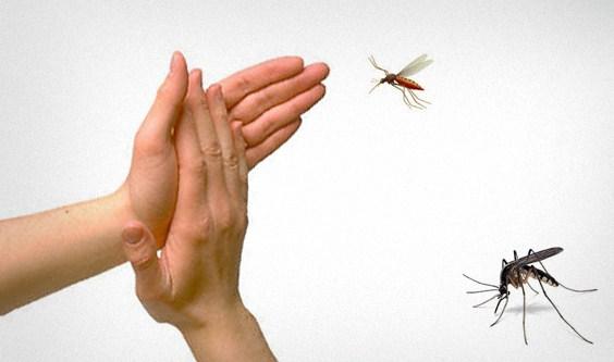Sumber Rejeki Dari Eksistensi Nyamuk