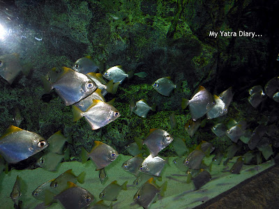 Fishes at the Epson Aquarium, Prince Hotel Shinagawa - Japan