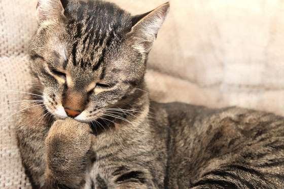 12 Bahasa Kucing