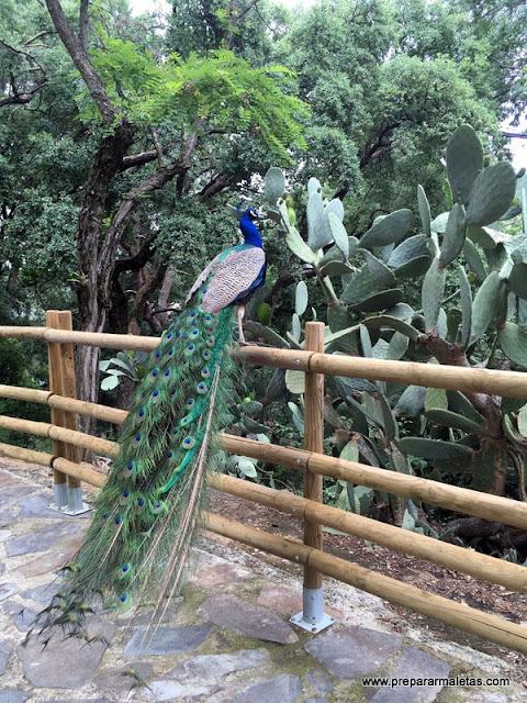 Parque de los Pinos en Plasencia