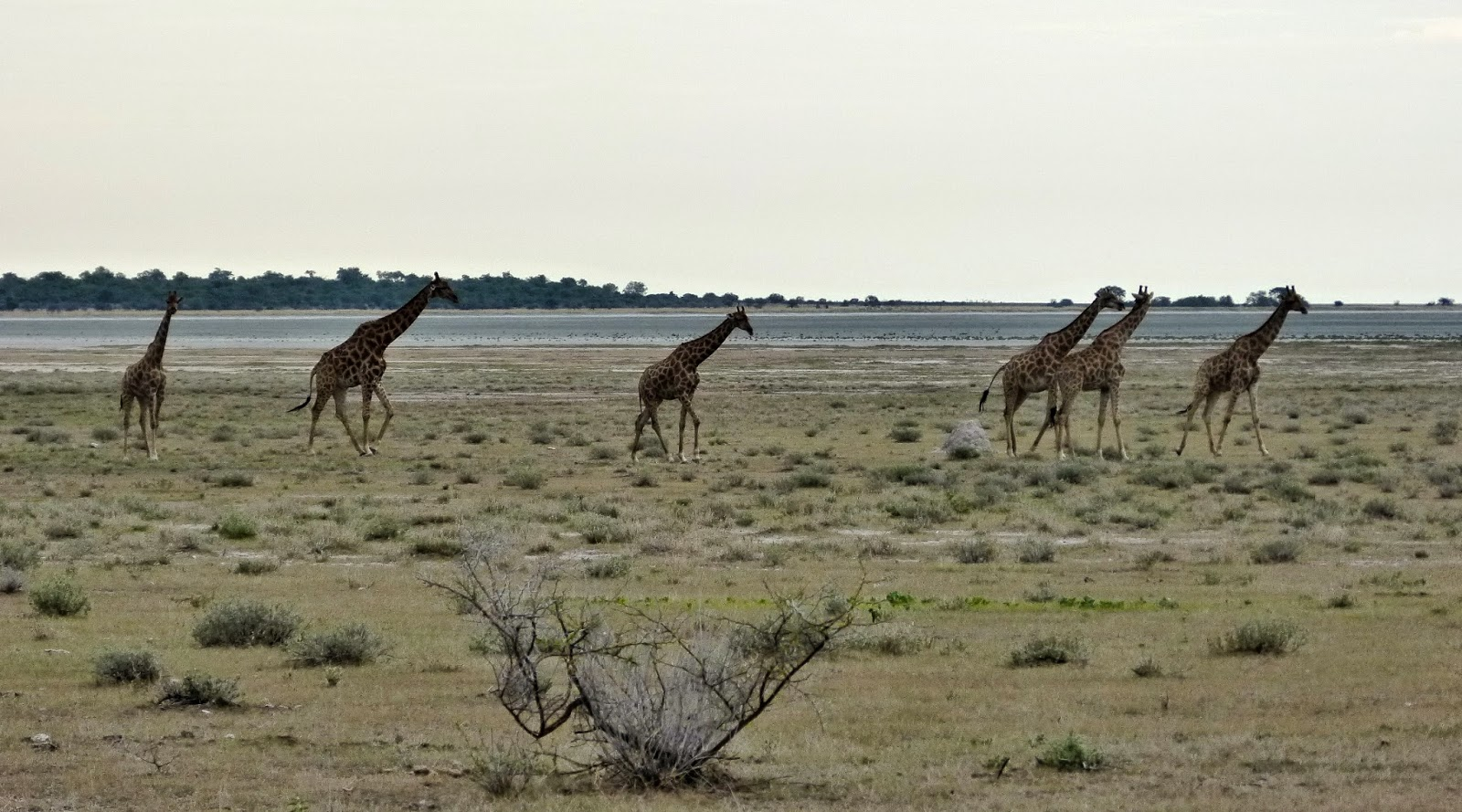 repose telephone girafe