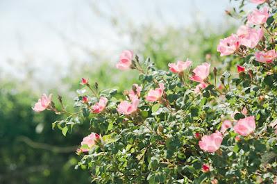 木の枝から咲く花