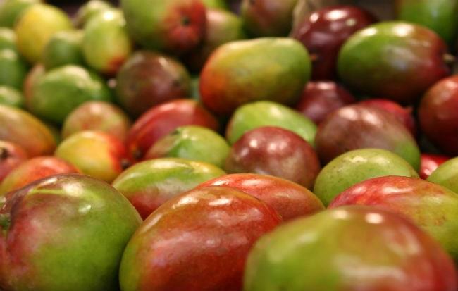 Il mango africano, frutto di Irvingia gabonensis