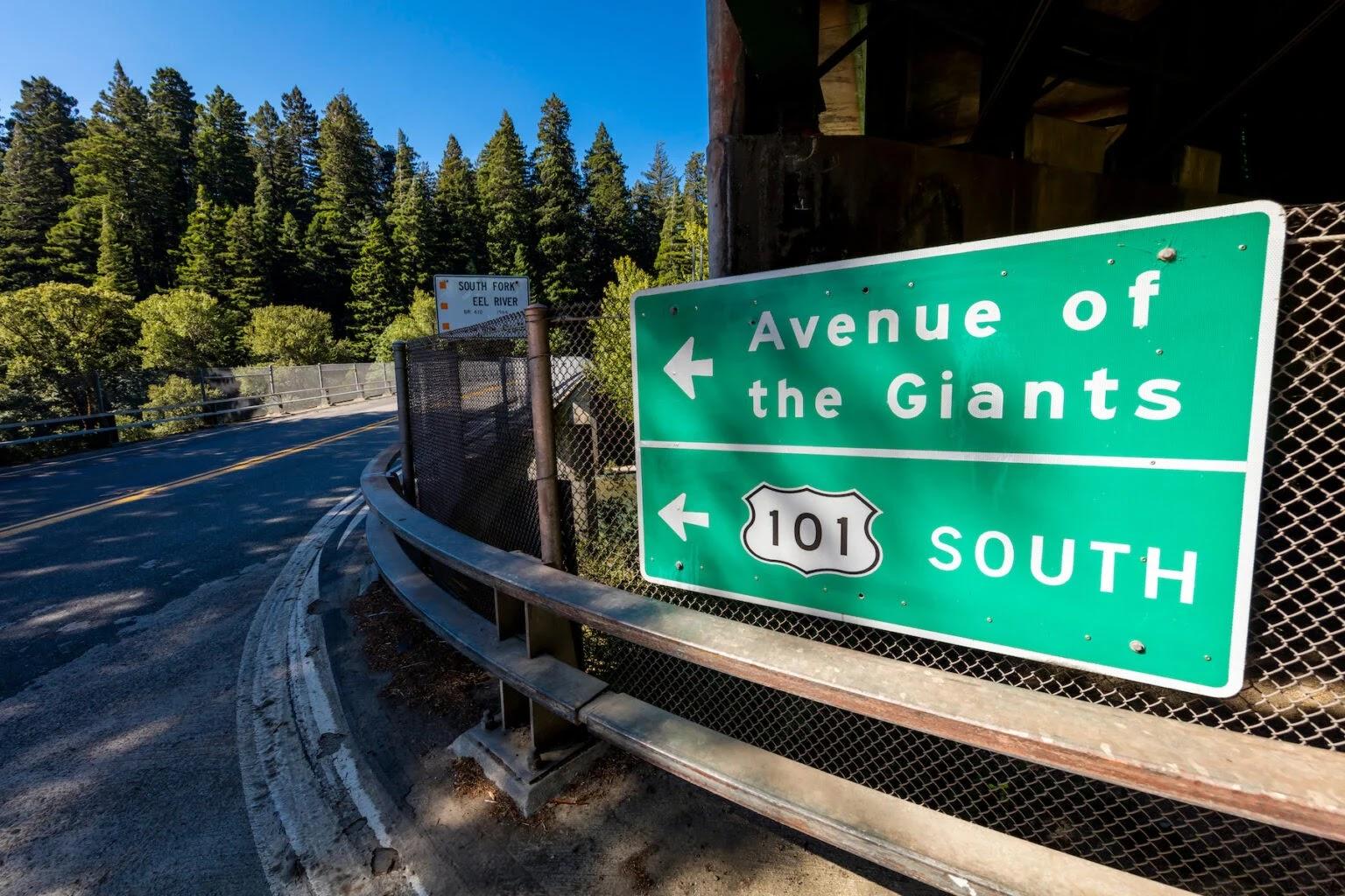 Гигантские секвойи в США. Авеню гигантов в Калифорнии